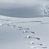 今シーズン3回のスキーから見えてきた日本の強み