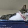 ベテラン監視員おネコさま。