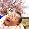 ・桜!ダイニングにハイローラック!