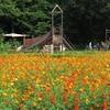 8月上旬の小宮公園に行ってきました その1(花畑とサービスセンター)