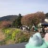 2017/3/5 FB友達と西伊豆~河津桜ツーリング その② σ(°∀°;)葉桜だったけれど