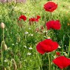 赤い花 ひときわ目を引きます♪