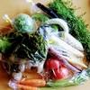 食べチョクで「旬の無農薬夏野菜おまかせセット」をお取り寄せ【愛媛県】