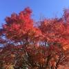 紅葉めっちゃ綺麗キャンプツーリング