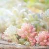 多肉植物の寄せ植えは、キラキラしていて最高に可愛い多肉の宝石箱