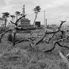 8月のフィルム写真ー2 震災遺構を巡る旅
