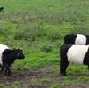 牛とベビーカー