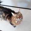 7年前に家から逃げ出した猫を捕獲して見知らぬ地に連れて行こうとするヤバイ奴!