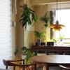 【北向きLDK】メリットも多い。が、植物好きには過酷かも。