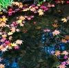 そうだ、紅葉の京都に行こう。①
