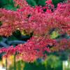 福井市養浩館庭園に紅葉目当てで入園
