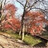 1.6(水・曇り)東京コロナ1500人超、全国コロナ5000人超。東証3日連続安。