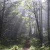 【阿弥陀岳(八ヶ岳)】2015年9月4日 御小屋尾根は静かなルート… と思いきや最後はちょっとドキドキ(日帰り登山)
