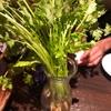 【三軒茶屋】パクチーバル シンチャオ Xinchao でパクチー食べまくり