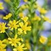春の花が満開♪希望の黄色い花で免疫力アップ!