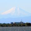 ハイイロチュウヒのいる風景ー富士山