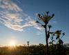 【北の怪植物エゾニュウ】日本代表に負けない盛り上がりを見せる海岸のエゾニュウ