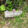 断酒4日目 目国内岳