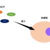 iPS細胞の作り方(意外と知られていないその仕組み)