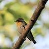 【野鳥】No.12 新潟 春の野鳥