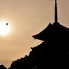 梅雨入り時、単焦点で撮り歩いた京都 その5