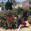 大磯町の緑あふれる自宅の庭を一般公開する「オープンガーデン」