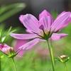 季節の花(令和三年九月 三)