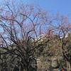 子連れお出かけ 世田谷区 駒沢公園