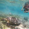 【バリ島 ⇔ ギリ島】2019 女子旅!?⑪ 最高のサンセット、ウミガメ遭遇率が神かも!