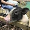 サムローンのインペリで11月25(水)まで開催中の動物フェアに行ってきた♪