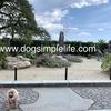 犬連れ 熱海へ電車で一泊旅行「お宮の松」へ