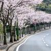 貯水池そばの桜並木 福岡県北九州市若松区 頓田(とんだ)