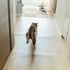 荷物がくると猛ダッシュな愛猫