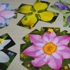 蓮園に美しい花を咲かせよう。カードゲーム「ロータス(Lotus)」