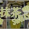 抹茶を使ったお菓子・スイーツのレシピまとめ!