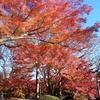 【お花見・紅葉12】殿ヶ谷戸庭園の紅葉 【ランチ】ほんやら洞のチキンカレー 【レンタサイクル6】スイクル沿い