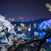 2018年千鳥ヶ淵の桜