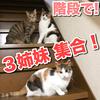 我が家の階段で猫3姉妹が集合!!何事!?!?