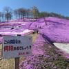 2017年初夏に北海道観光するなら東藻琴の芝桜を見に行け!