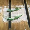 【水耕栽培】緑のカーテンの為にゴーヤの摘心をする。