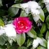 11月22日は小雪★バラ★おまじない