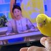 某ニュース番組のキャスターとツーショの瑠菜