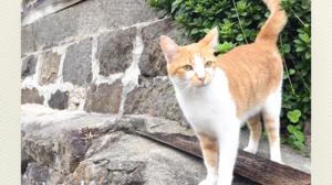 ネコ英語「尾道ネコの旅」
