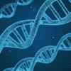 日本人だけが持つ能力の由来「YAP-遺伝子」