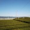 『これぞ静岡!』な光景を楽しめる季節