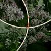 八木前通りかまえ堀公園・色な場所の思い出・紫6…