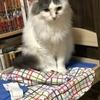 【猫ブログ】ココの日常