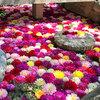 【奈良】奈良の明日香村にある別名「花の寺」とも呼ばれる『岡寺』はめちゃめちゃフォトジェニック!なお寺だった