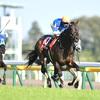 2018年青葉賞 GⅡ 前走2200mか、それ以上の距離のレースで3着以内経験のある馬の好走率が高い