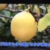 NHK Eテレ 食と人をつなぐ 日本農業賞受賞のトップランナー達